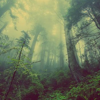 森からは各種薬草